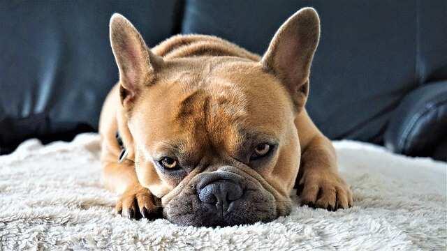 Hunde Fellwechsel Fellpflege