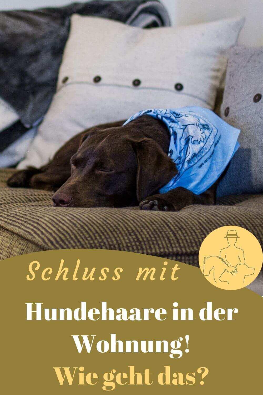 Hund bei demFellwechsel - der Fellpflege unterstützen