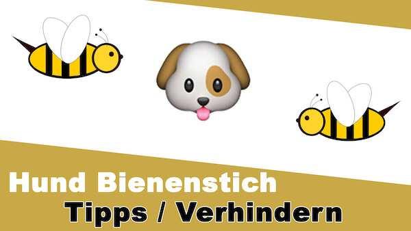 Hund-Bienenstich-Tipps