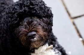 Liste hunde für allergiker Tiere Für