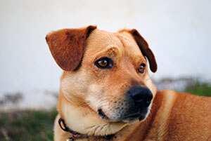 Reico-Hundefutterhaendler