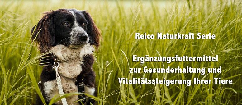 Bewertung Reico Hundefutter online shop