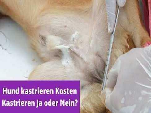 Sollte man ein Hund kastrieren